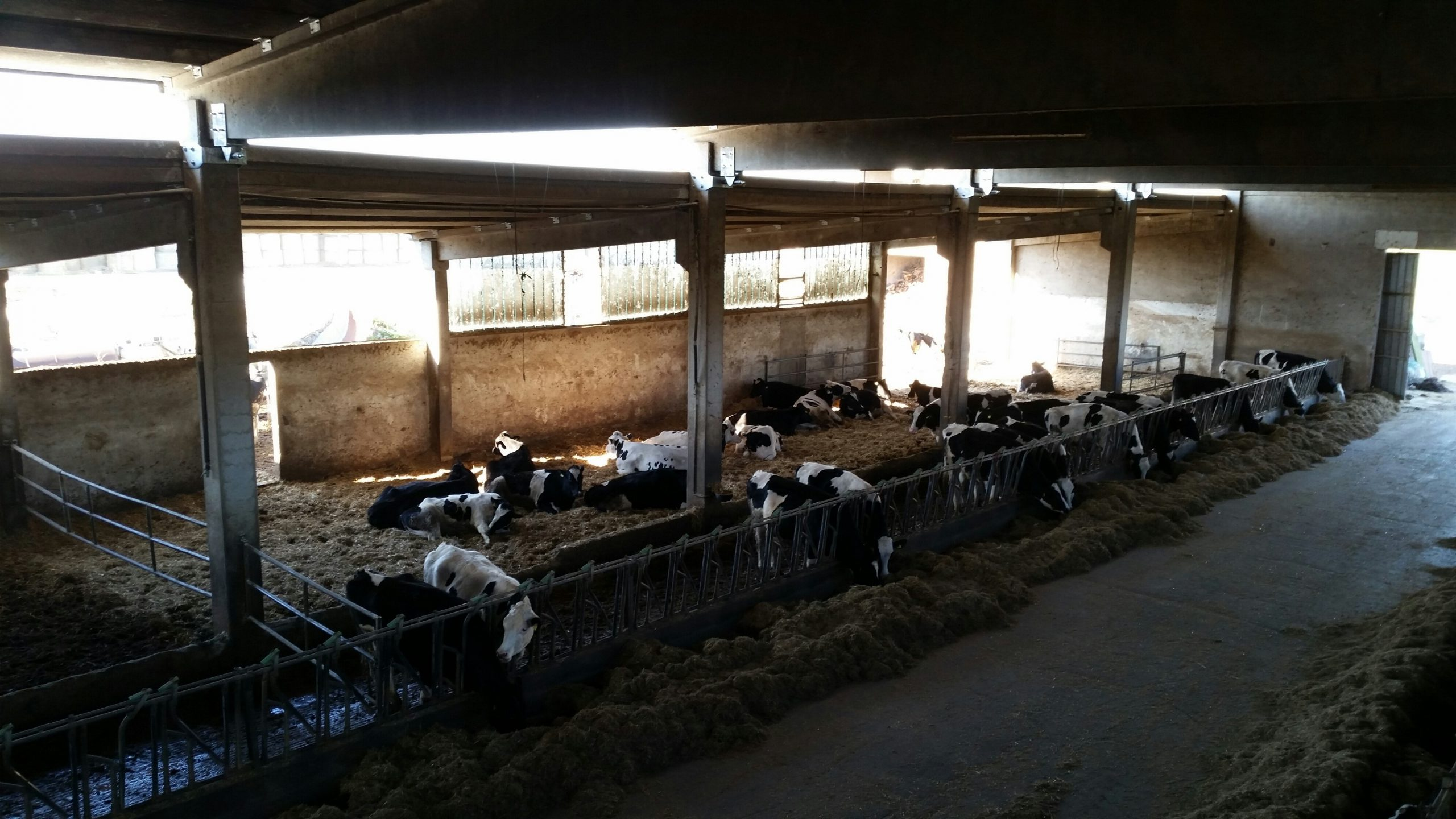 Complesso agricolo Reggio emilia - interno